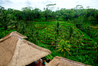 Balinese Rice Terraces #3