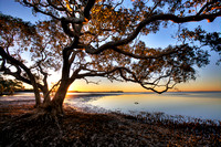 Mangrove Sunset #2