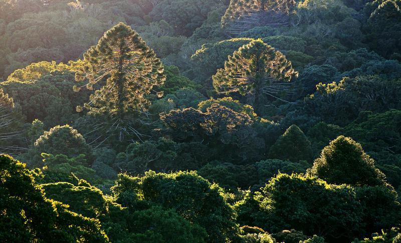 IMAGE: http://hardlightimages.zenfolio.com/img/s1/v48/p121894233-4.jpg