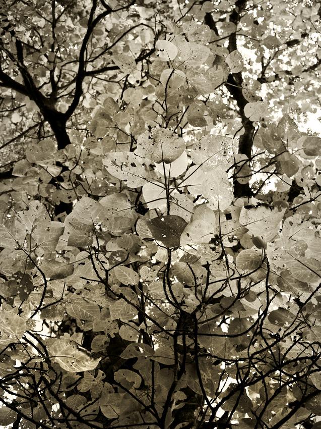 IMAGE: http://hardlightimages.zenfolio.com/img/s1/v49/p143468304-5.jpg