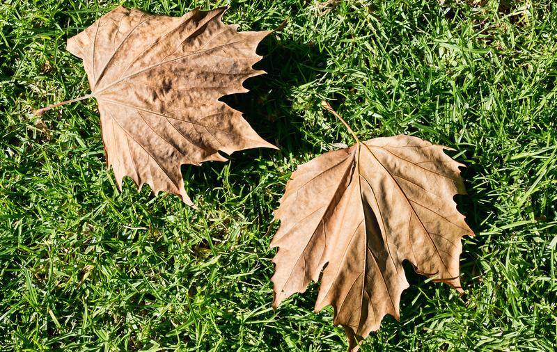 IMAGE: http://hardlightimages.zenfolio.com/img/s3/v42/p926950157-4.jpg